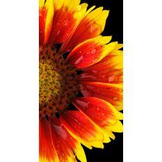 Toalha-de-Praia---Buettner---Linha-Beach-Collection-Plus---Estampa-Flower