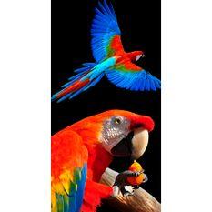 toalha-de-praia-buettner-linha-beach-collection-tropical-estampa-red-macaw