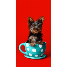 toalha-de-praia-buettner-linha-beach-collection-tropical-estampa-dog-in-a-cup